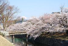 松本城-さくら満開_c0094442_15395343.jpg