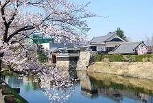 松本城-さくら満開_c0094442_1540129.jpg