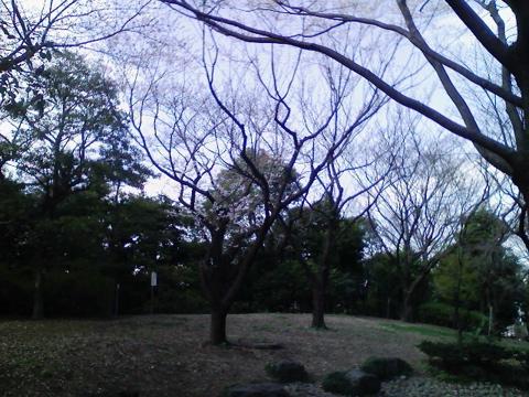 桜さくらヨヨイの宵は_e0058443_1292840.jpg