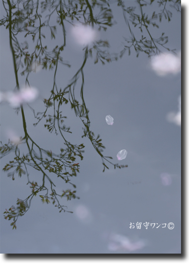 f0111147_011678.jpg
