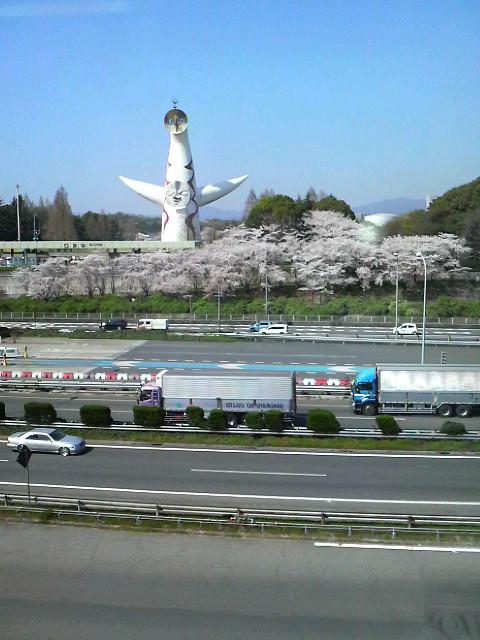 絶景の花見_c0185356_2032053.jpg