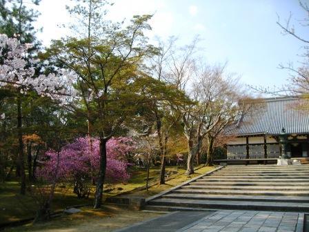 仁和寺(にんなじ)へ_e0139459_16194624.jpg