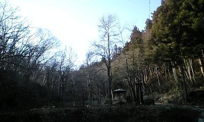 森林の癒やし_c0151965_1926278.jpg