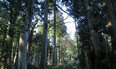 森林の癒やし_c0151965_19263796.jpg