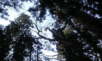 森林の癒やし_c0151965_19264611.jpg