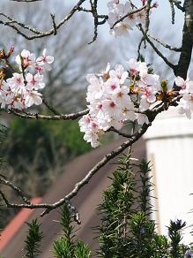 春の美味しい遠足_f0134268_12435790.jpg