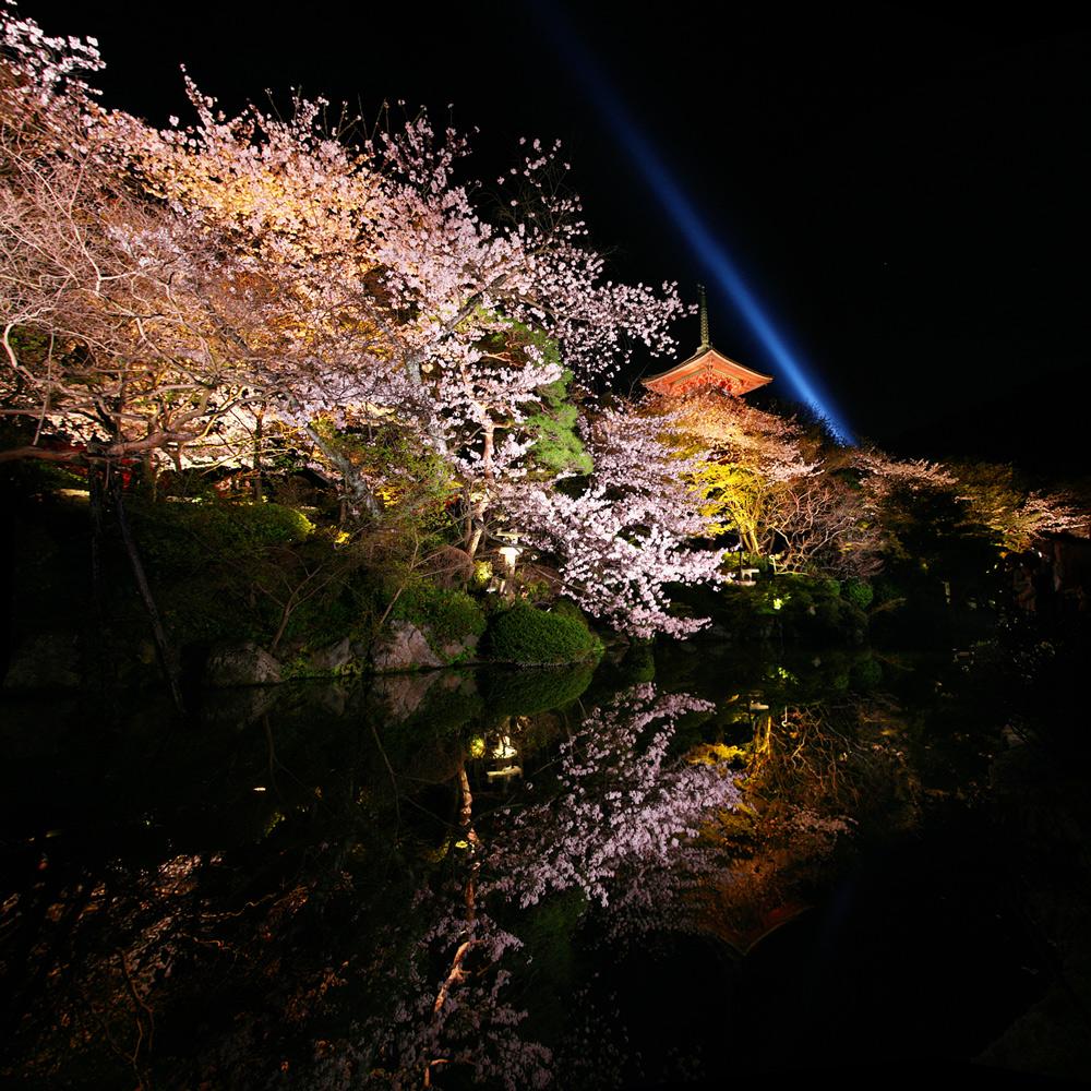 清水寺 桜ライトアップ_f0021869_18283947.jpg