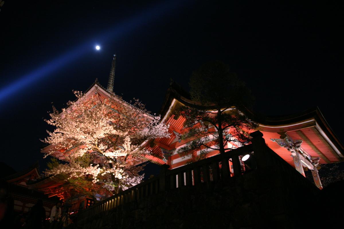 清水寺 桜ライトアップ_f0021869_1828973.jpg