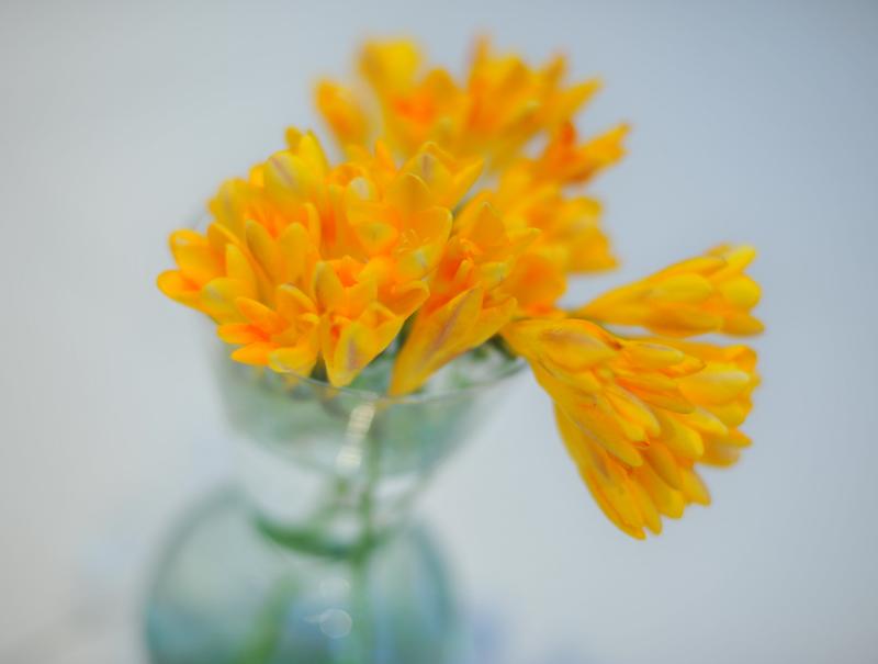 #09-52   Flower_b0065572_6384243.jpg