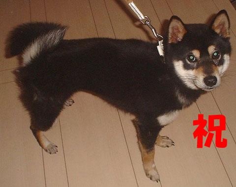第55回ちばわん いぬ親会 in湘南(第5回) ご報告_d0027698_1135421.jpg