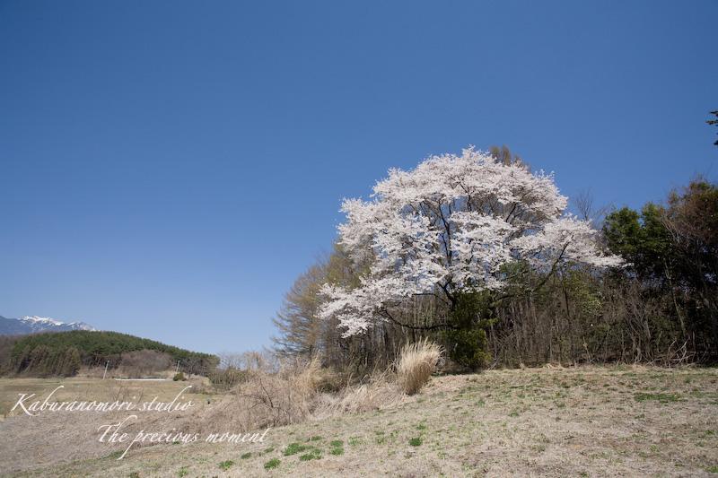 09/4/11 桜の下でお昼_c0137403_21343197.jpg