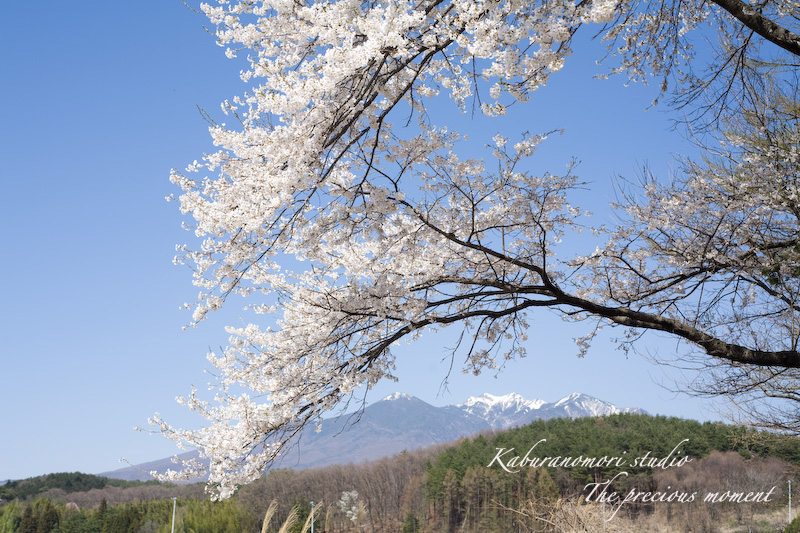 09/4/11 桜の下でお昼_c0137403_2142245.jpg