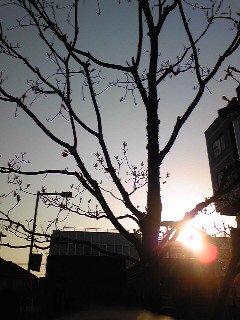 sunrise_c0197505_721546.jpg