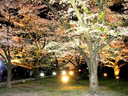 植物園ライトアップ_e0048413_22224625.jpg