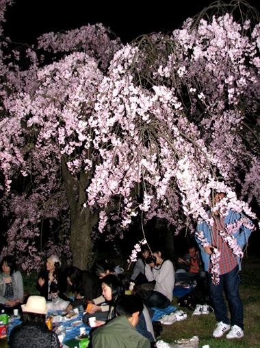植物園ライトアップ_e0048413_22231627.jpg