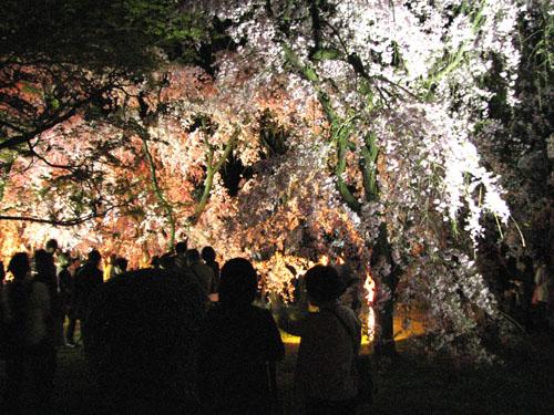 植物園ライトアップ_e0048413_2223237.jpg