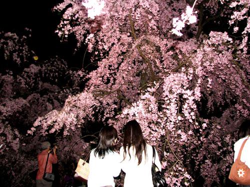 植物園ライトアップ_e0048413_22232852.jpg