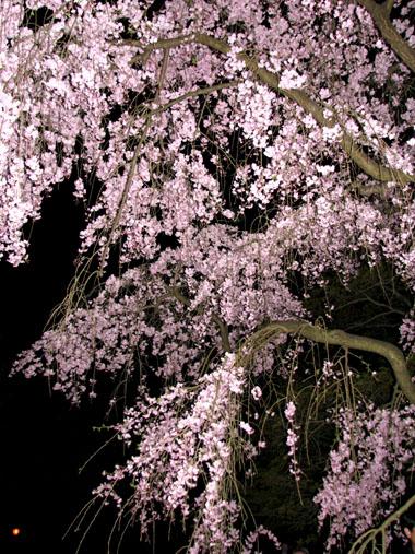 植物園ライトアップ_e0048413_22234276.jpg