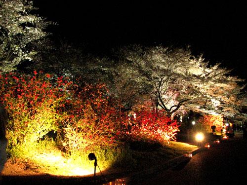 植物園ライトアップ_e0048413_22235499.jpg