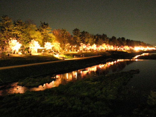 植物園ライトアップ_e0048413_22241831.jpg