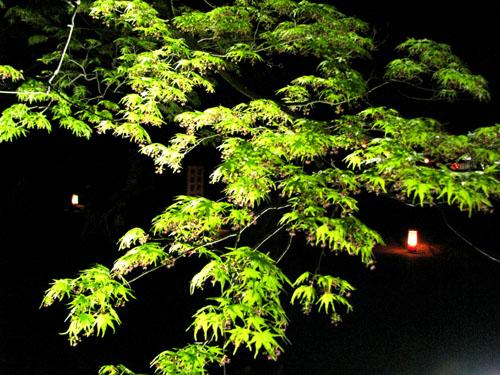 植物園ライトアップ_e0048413_2224734.jpg