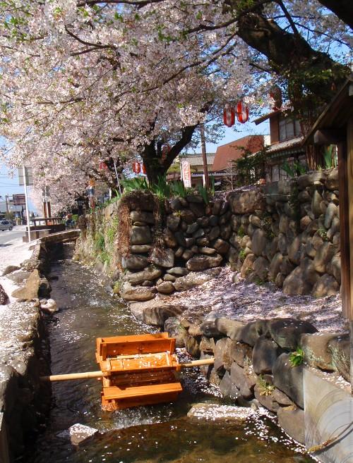 バイクで桜舞う城下町小幡へ_c0177814_20172475.jpg
