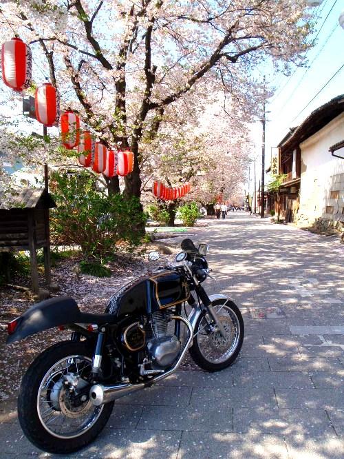 バイクで桜舞う城下町小幡へ_c0177814_202452.jpg