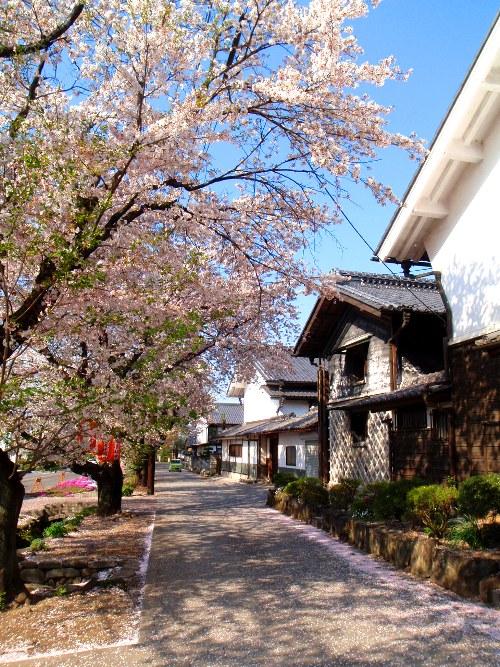 バイクで桜舞う城下町小幡へ_c0177814_2065347.jpg