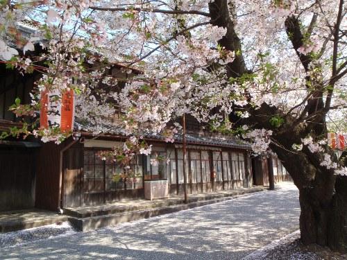 バイクで桜舞う城下町小幡へ_c0177814_208123.jpg