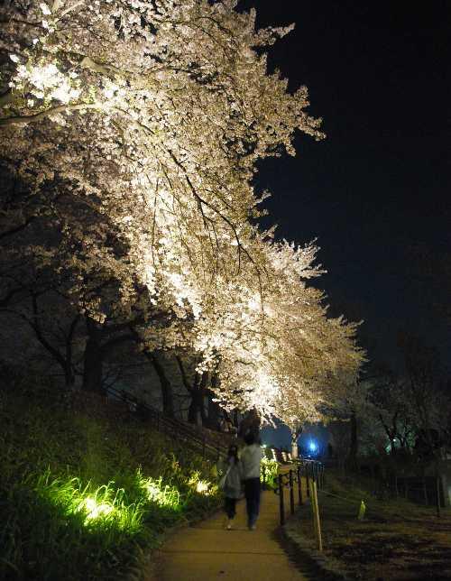 光の街まえばしプロジェクト_c0177814_924111.jpg