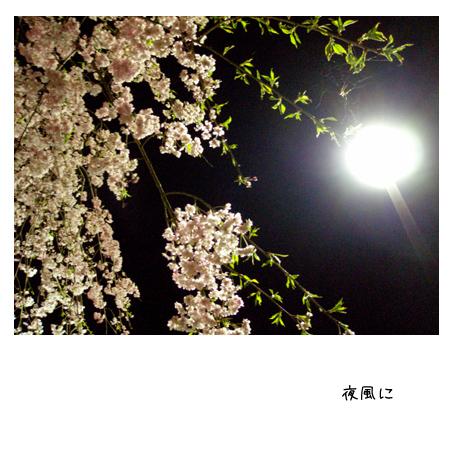 f0192530_07581.jpg