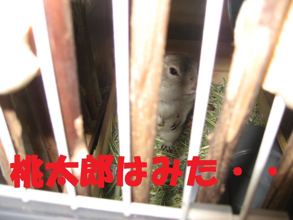 b0138734_2013433.jpg