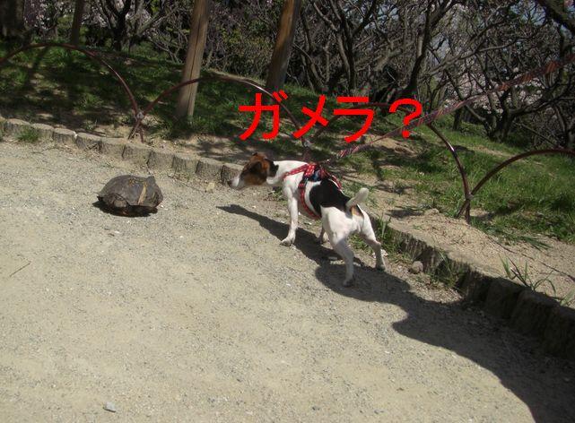 f0053952_12433696.jpg