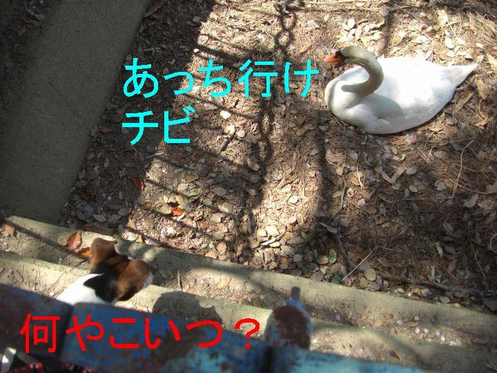f0053952_12572587.jpg