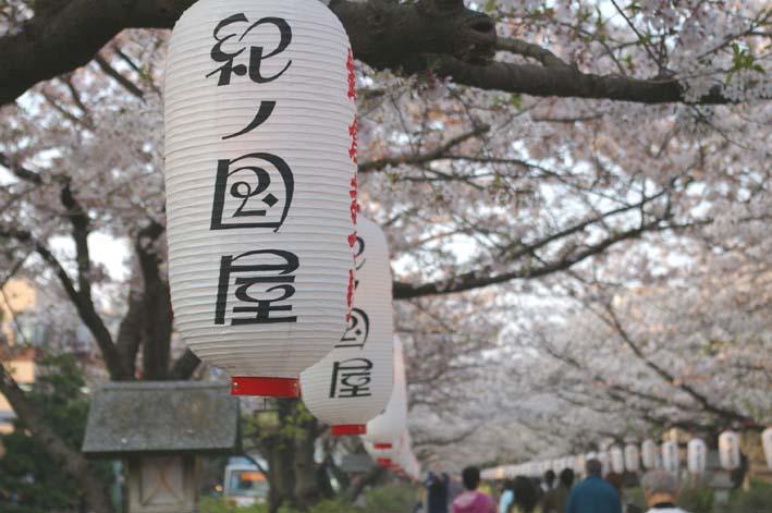長期間 楽しませてくれた六国見山の山桜(2009・4・10)_c0014967_1222919.jpg