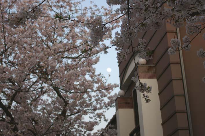 長期間 楽しませてくれた六国見山の山桜(2009・4・10)_c0014967_1224790.jpg