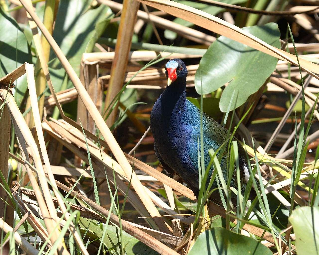 フロリダで出会った鳥達(その1)_f0105570_185253.jpg