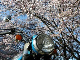 桜を楽しんで_a0064474_22574678.jpg