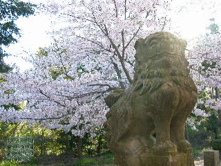 桜を楽しんで_a0064474_23123617.jpg