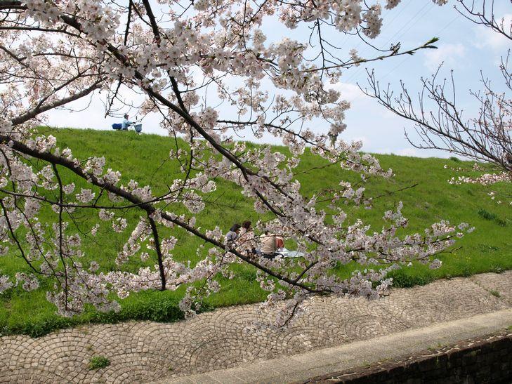 桜 part1_f0097683_15181577.jpg
