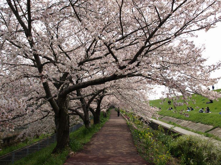 桜 part1_f0097683_15182632.jpg