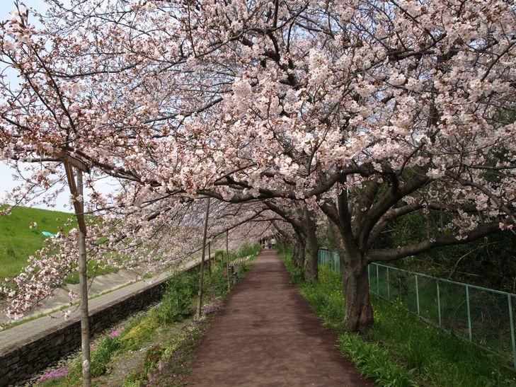 桜 part1_f0097683_15183317.jpg