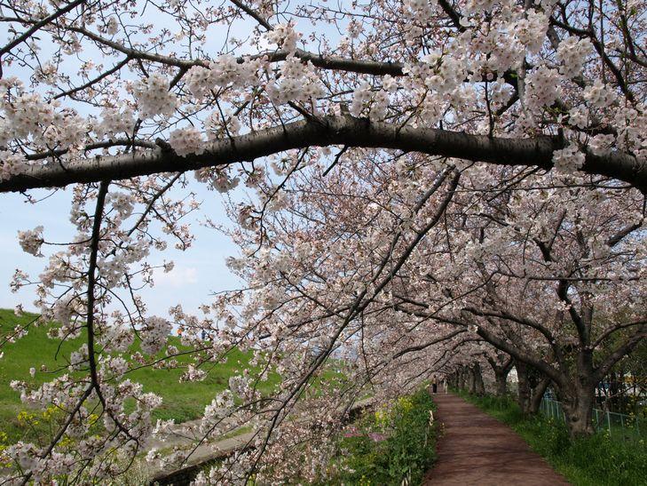 桜 part1_f0097683_15184498.jpg