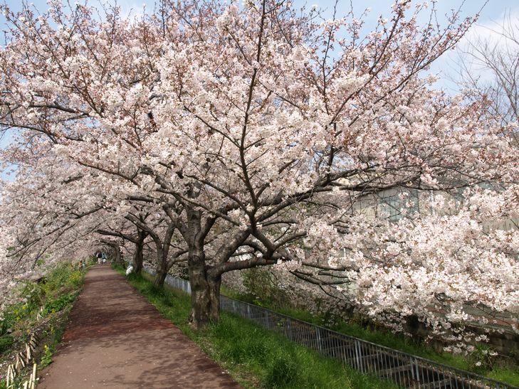 桜 part1_f0097683_15185055.jpg