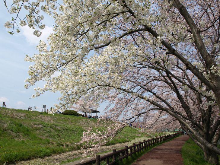 桜 part1_f0097683_1519225.jpg