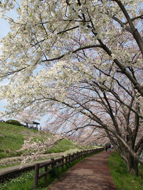 桜 part1_f0097683_1519814.jpg