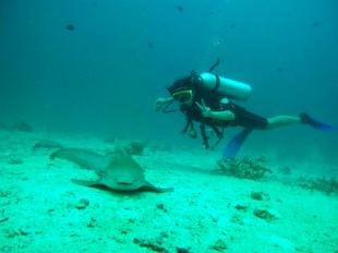 ピピ島 カメの予定が…。、_f0144385_23481459.jpg