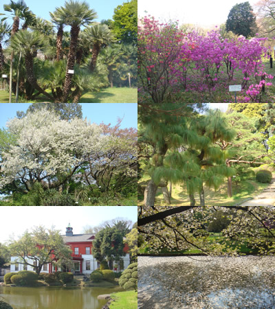 小石川植物園(文京区) 春編_d0132289_21363456.jpg