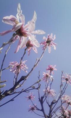 春うらら_f0168392_22212516.jpg