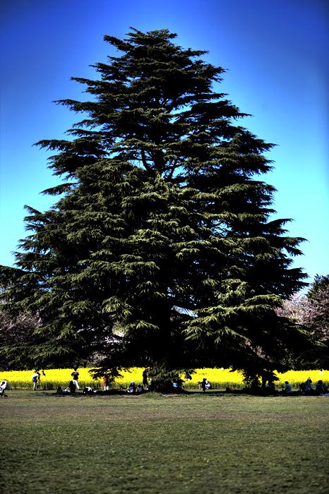 気になる樹。。。_e0139093_6231330.jpg